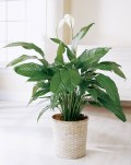 tropical plants for the home
