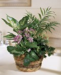 tropical plants as gifts