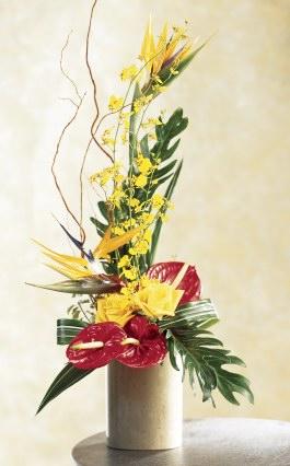 bird of paradise flower care instructions